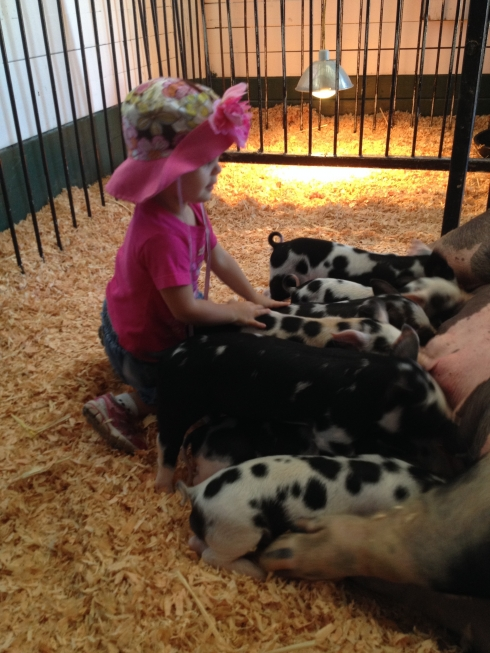 Polka dotted piglets