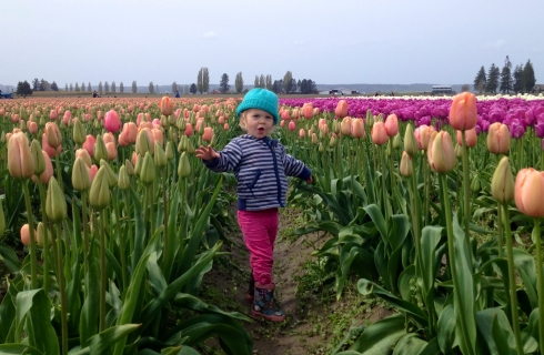 Tulip Stroll